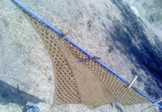 lacewingspan8-6-12a.jpg