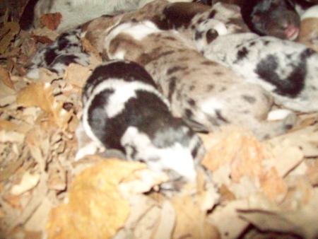 puppies-10-16b.jpg