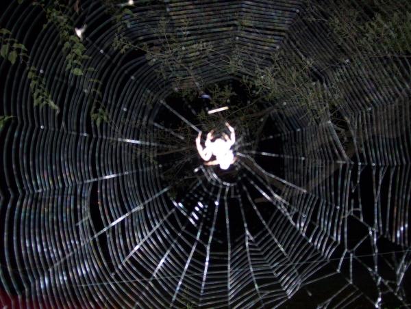 spiderweb2007-fuzzu.jpg