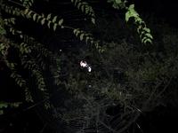 spiderweb2007.jpg
