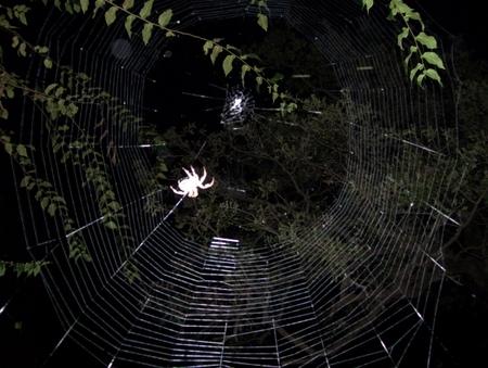 spiderweb2007a.jpg