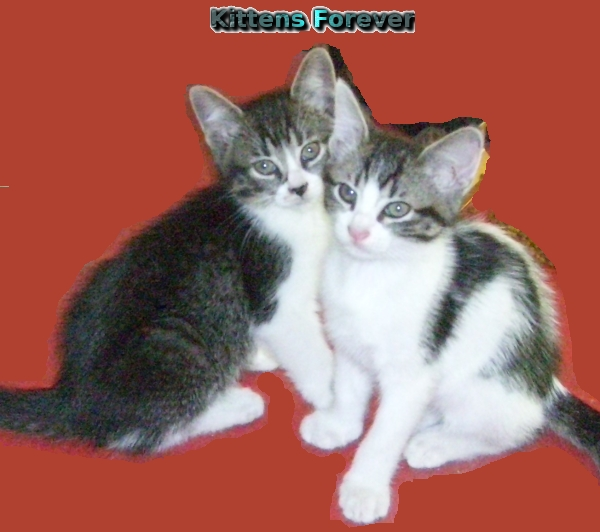 Kittens520a.jpg